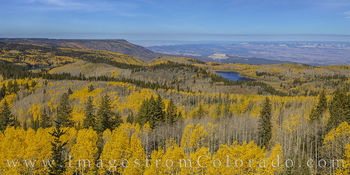aspen, grand mesa, fall, autumn, yellow, gold, colors, mesa lakes