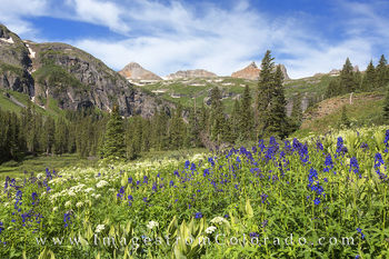 ice lakes trail, silverton, ice lakes, island lake, colorado wildflowers, wildflower photos, 13ers, san juans, san juan mountains, colorado landscapes