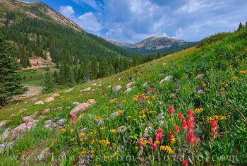 Jones Pass Wildflowers 713-1