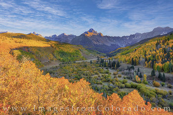aspen, fall, scrub oak, gold, sneffels, country road 7, ridgway, autumn