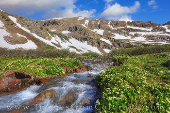 march marigolds, herman lake, herman gulch, colorado wildflowers, hiking, summer, morning, altitufe