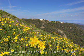 colorado wildflower photos, colorado wildflower prints, colorado landscapes, byers peak images, byers peak prints, fraser colorado images, colorado images, grand county, colorado hiking, trails, winte