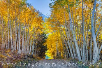 Ophir Pass Autumn Aspen 103-1