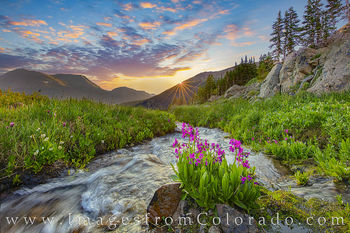 parry's primrose, clear creek county, berthoud pass, butler gulch, stream, sunrise