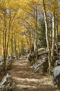 aspen, trail, path, rocky mountain national park, rmnp, bear lake, morning, fall, autumn, cold