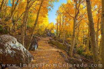 Rocky Mountain National Park, Estes Park, Bear Lake, Aspen, Autumn, fall, gold, yellow, morning, trail, path, hike