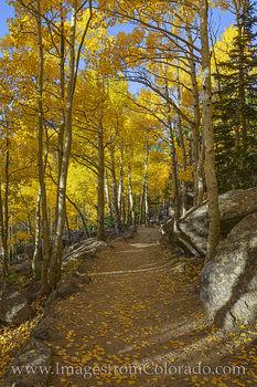 Rocky Mountain Aspen Trail 102-3