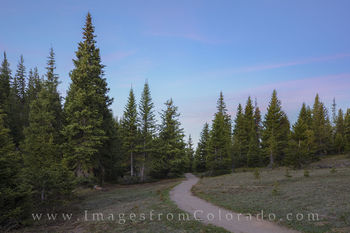 RMNP Trail into the Forest 1