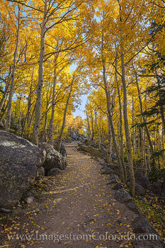 Rocky Mountain National Park Aspen Path 1