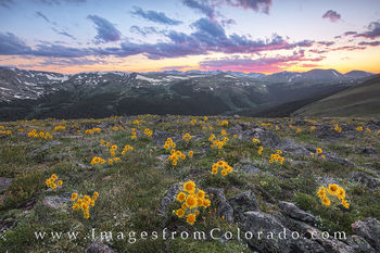 colorado wildflowers, sunflowers, old man of mountain, rocky mountain national park, RMNP, colorado sunflowers, colorado sunset, rocky mountains, grand county, trail ridge road