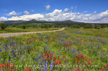 Colorado Wildflower images, Colorado Wildflower photos, wildflowers, paintbrush, lupine, Colorado Wildflowers, wildflowers, colorado