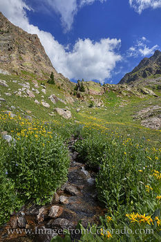 wildflowers, summit county, piney lake, hiking, summer, colorado wildflowers, vail, morning, cirque, water, stream