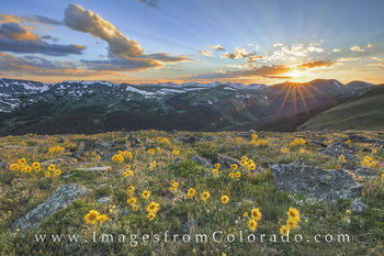 colorado wildflowers, sunflowers, old man of mountain, rocky mountain national park, RMNP, colorado sunflowers, colorado sunset, rocky mountains, grand county, trail ridge road