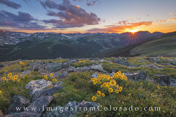 Colorado wildflowers, Rocky Mountain National Park, trail ridge road, rmnp, sunflowers, colorado sunset, sunset, landscapes