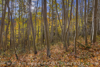 aspen, winter park, fraser, morning, cold, fall, autumn, gold, orange, sunlight
