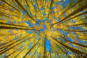 The Aspen Grove in Fall 103-1