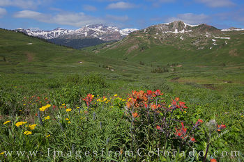wildflowers, aspen, maroon bells, maroon pass, crested butte, hiking, colorado hikes, paintbrush, morning, summer