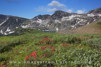 Wildflowers above Cathedral Lake 1