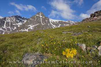 Wildflowers and Mount Holy Cross 1