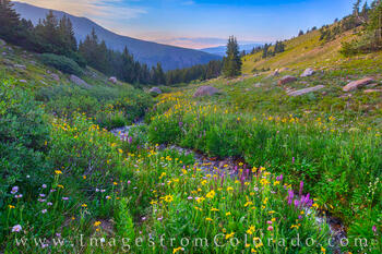 Wildflowers and Solitude 1