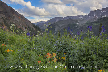 colorado wildflower images, colorado landscapes, colorado landscape photography, colorado, yankee boy basin, yankee boy basin prints, colorado prints, ouray, summer