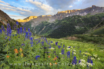 colorado wildflower photos, yankee boy basin, ouray, sneffels, landscapes, rocky mountains, paintbrush, colorado wildflowers, colorado summer
