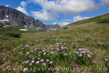 wildflowers, grays peak, stevens gulch, hiking, colorado hiking, 14ers, Grays peak trail, torreys peak trail, colorado wildflowers, summer, afternoon paintbrush, daisies