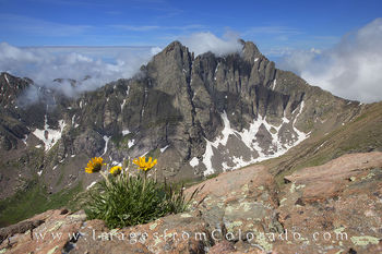 colorado wildflowers, colorado 14ers, colorado wildflower images, 14er images, colorado landscapes, humbolt peak, crestone peak, crestone needle