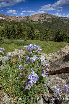 colorado wildflowers, colorado landscapes, colorado wildflower images, butler gulch, colorado photos