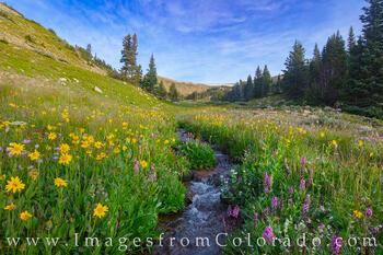 Wildflowers of the Forgotten Creek 1