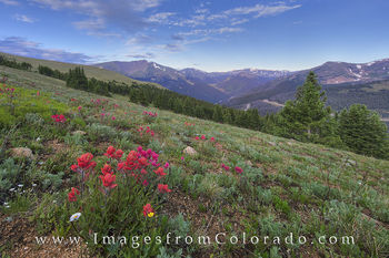 colorado wildflowers, berthoud pass, wildflower images, berthoud pass images, CDT images, red mountain, grand county, grand county images, paintbrush, colorado morning, colorado summer