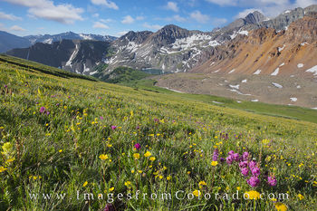 electric pass, colorado wildflowers, colorado wildflower images, cathedral lake, cathedral peak, cathedral lake hike, electric pass hike, maroon bells wilderness, elk mountains, elk range