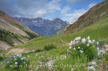lake city, silver creek trailhead, colorado landscapes, colorado wildflowers, columbine, san juan mountains, san juans, rocky mountains, hiking, colorado hikes