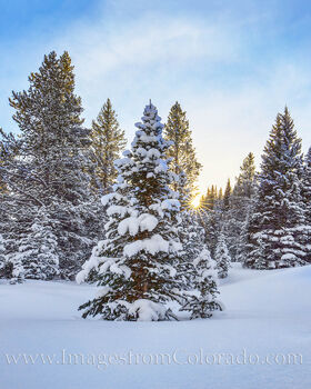 winter, snow, morning, sunrise, pine trees, cold, christmas, serene, colorado prints, winter park prints, fraser, grand county