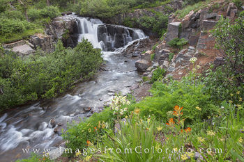 Yankee boy basin, ouray, twin falls, Colorado wildflower images, Colorado wildflowers, san juans, san juan mountains, indian paintbrush