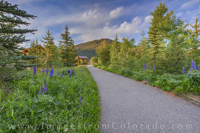grand lake, trail, path, walking, morning, lupine, peace
