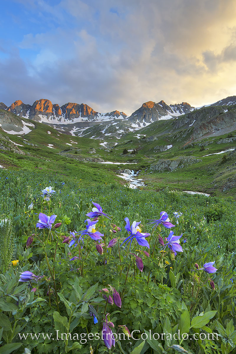 lake city, american basin, san juan mountains, american basin photos, colorado wildflowers, colorado wildflower photos, colorado landscapes, rocky mountains, photo