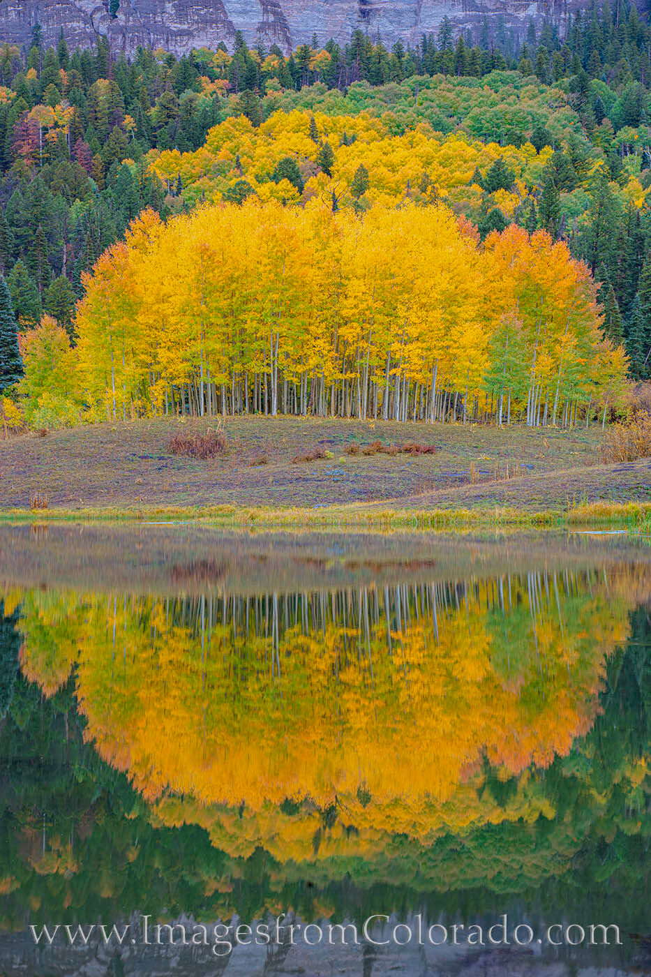 A grove of gold and orange aspen and its pristine reflection in the still waters of Clear Lake near Cimarron make for a beautiful...