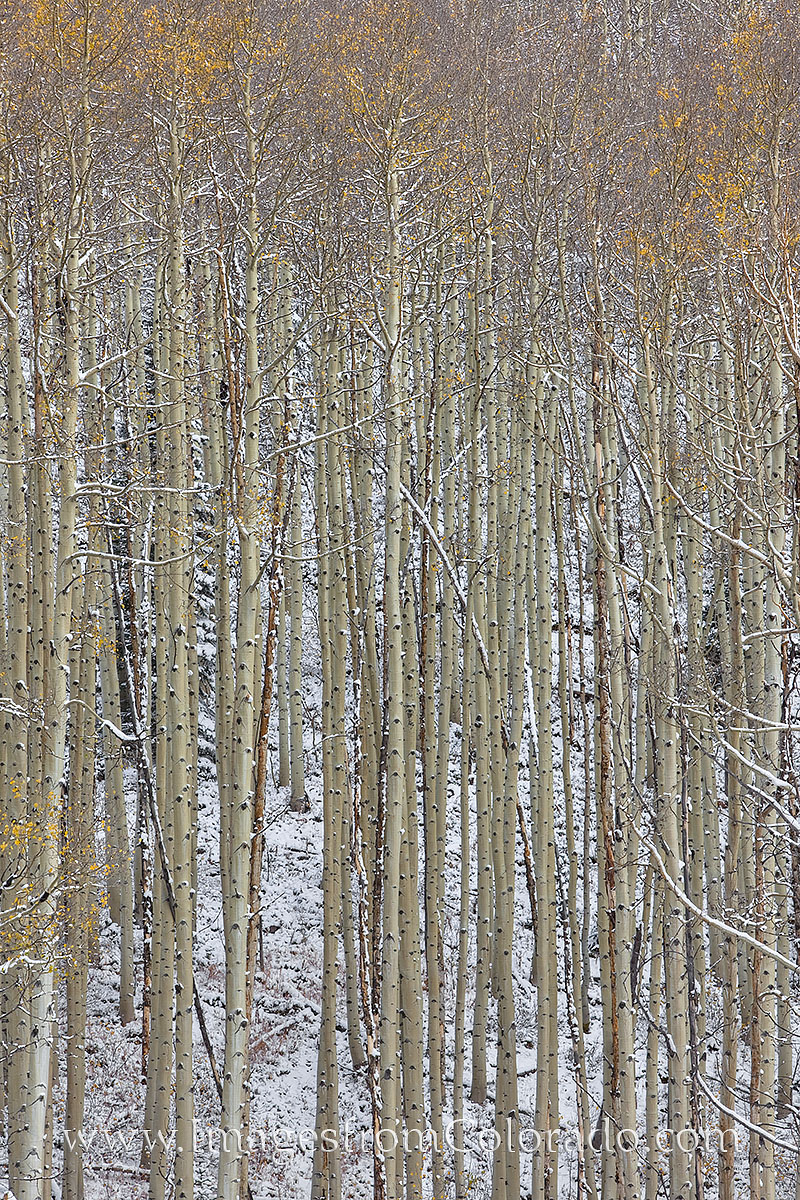 maroon bells, aspen trees, maroon bells wilderness, aspen trunks, snow, autumn, october, maroon lake, solitude, photo