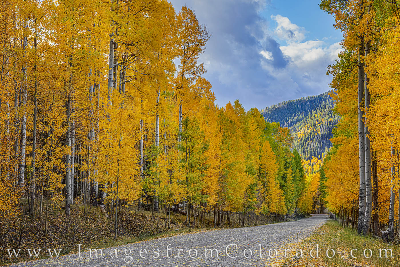 aspen, fall, autumn, gold, san juans, cold, autumn prints, colorado prints, photo