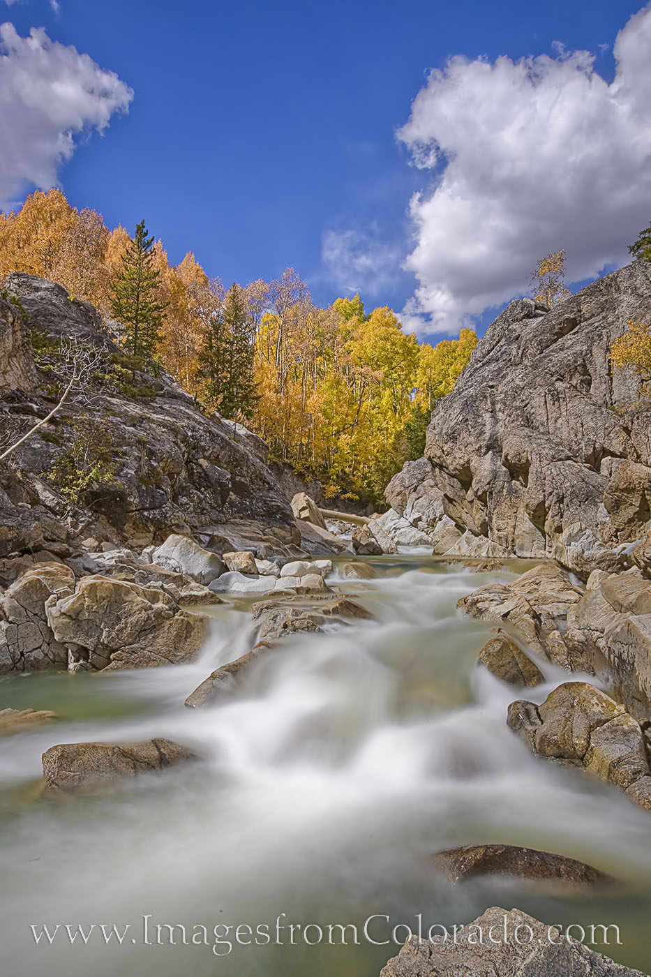 With water flowing down from high elevations, the aspen and cottonwood show their brillian golden fall colors along Lake Creek...