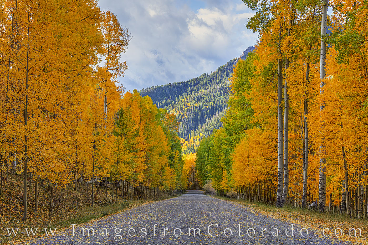 aspen, country road, fall, october, cimarron, san juans, autumn, gold, orange, photo