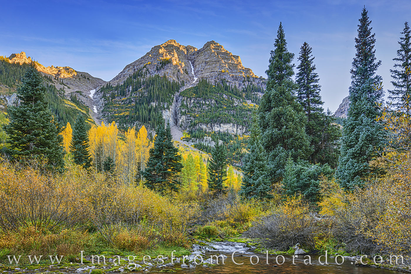Golden Aspen shine in the last light of an Autumn evening along West Maroon Creek in the Maroon Bells Wilderness Area.