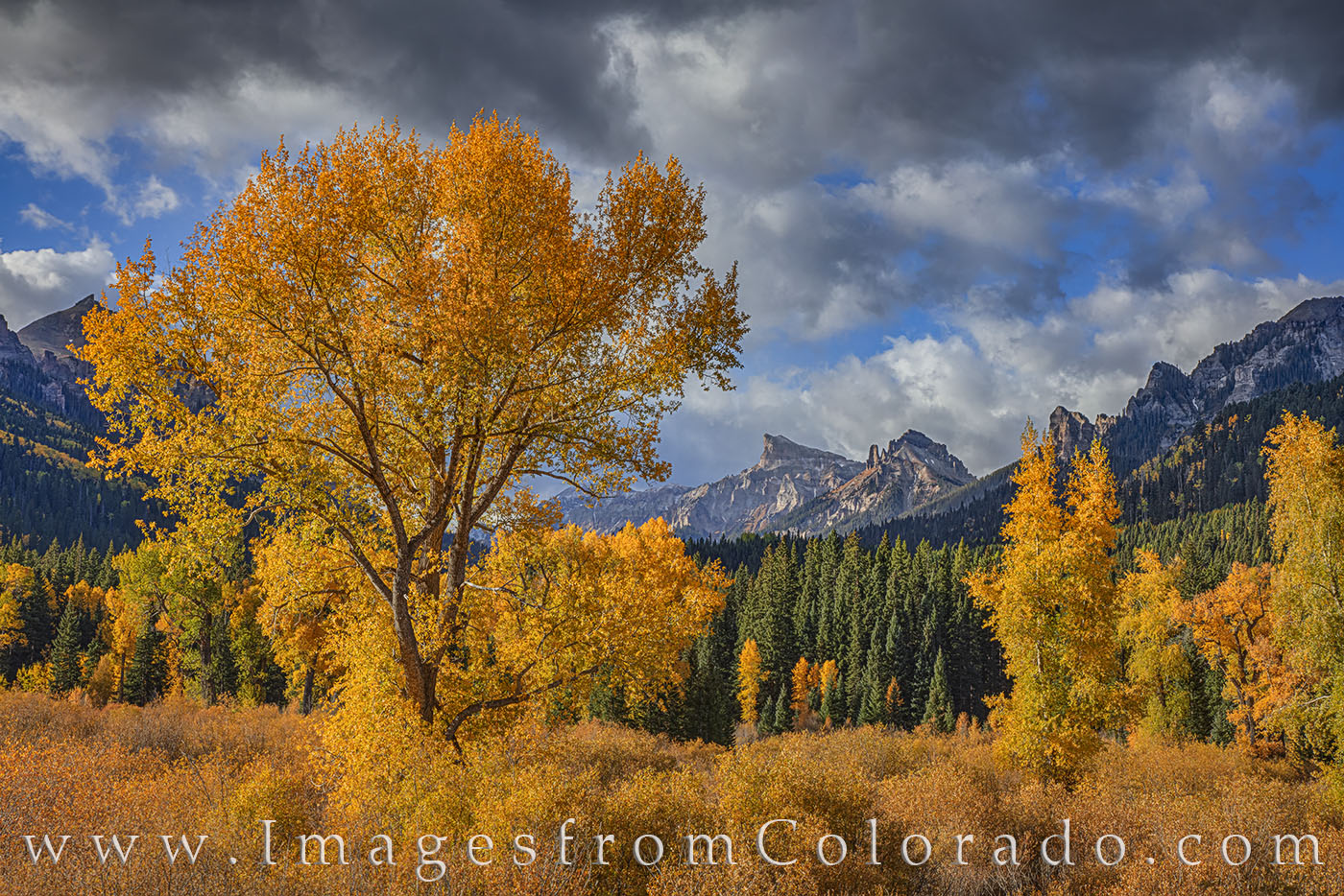 gold, autumn, fall, precipice peak, san juans, cimarron, photo