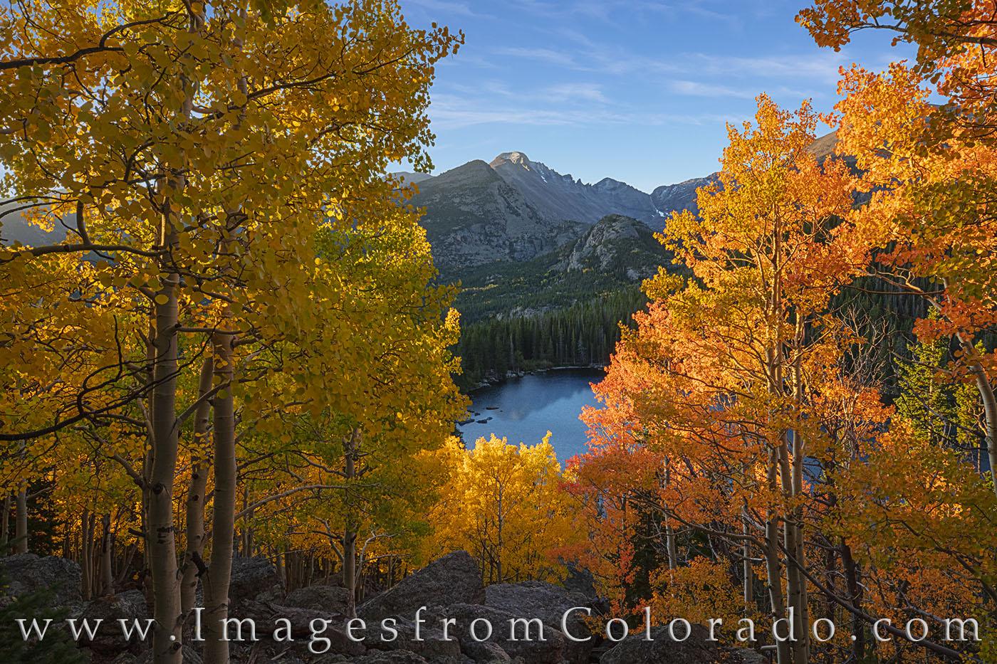 rocky mountain national park, rmnp, aspen, bear lake, autumn, colorado fall, colorado aspen, fall colors, autumn colors, colorado images, colrado autumn