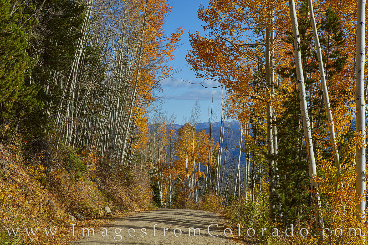 county road, fraser, winter park, autumn, fall, aspen, pine, morning, photo