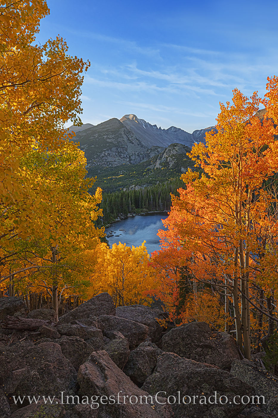 aspen, bear lake, rocky mountain national park, fall colors, autumn, orange, gold, longs peak, photo