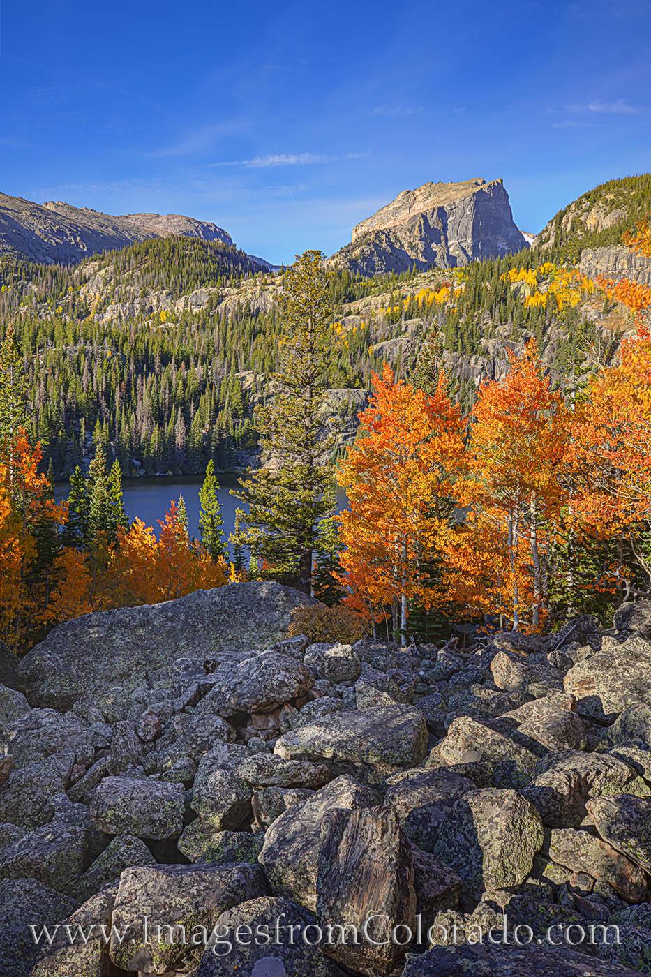 fall colors, autumn, rocky mountain national park, bear lake, prints, colorado prints, morning, orange, gold, aspen, photo