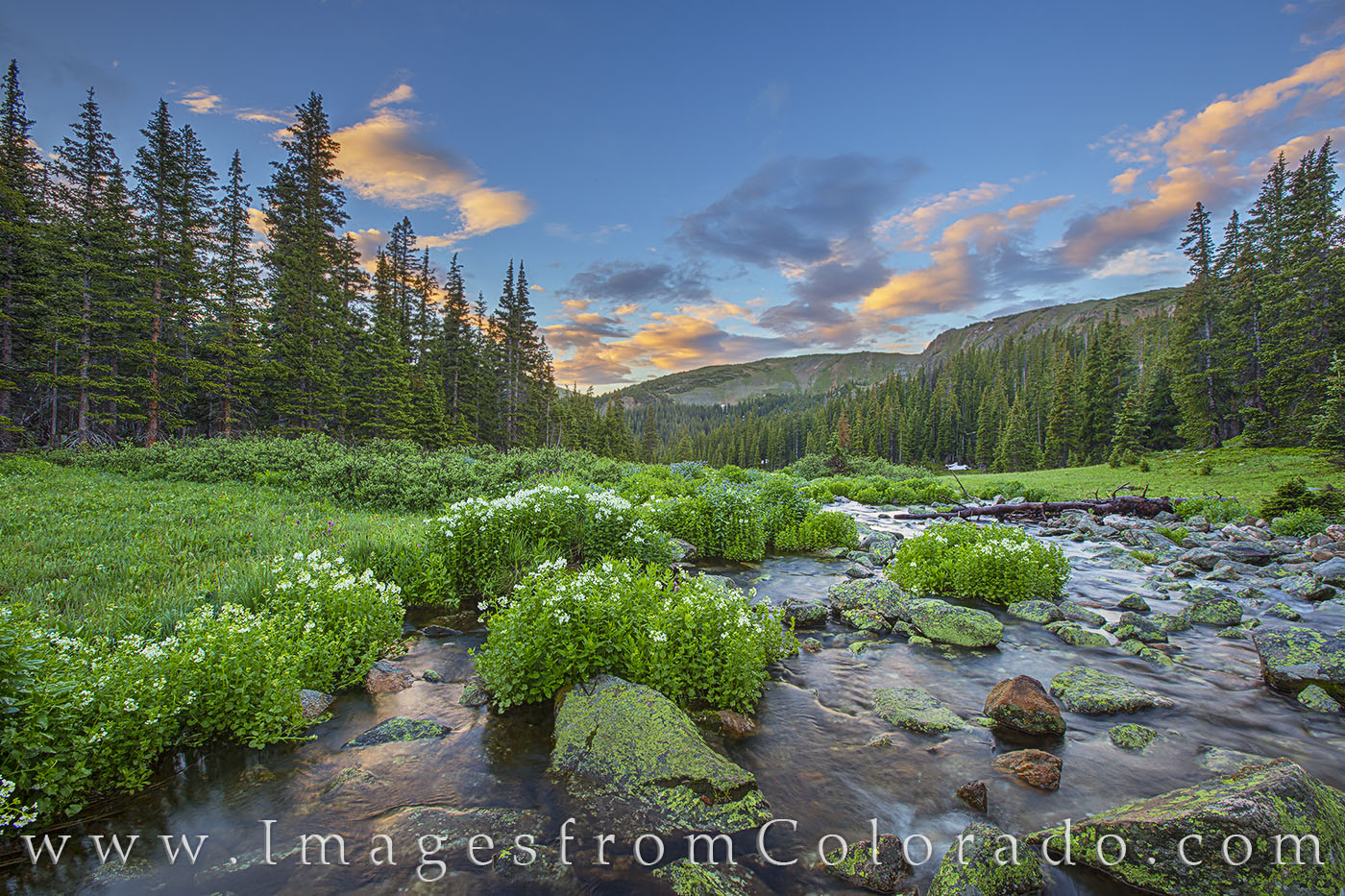 berthoud pass, sunrise, stream, water, flowers, marsh, 12, 000 feet, grand county, winter park, photo