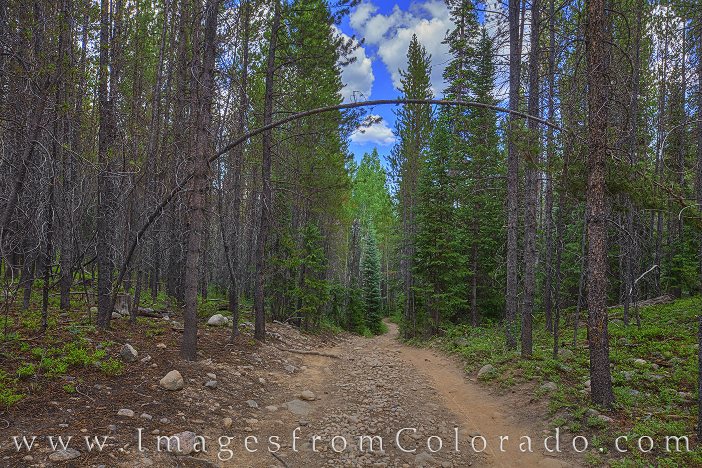 Blue Sky Trail in Winter Park, Colorado, is a great trail for hiking, trail running, or biking. It runs about 1.5 miles and connects...